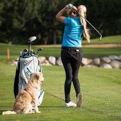 Neu! Hunde ab diesem Jahr  im Golfclub Sagmühle willkommen